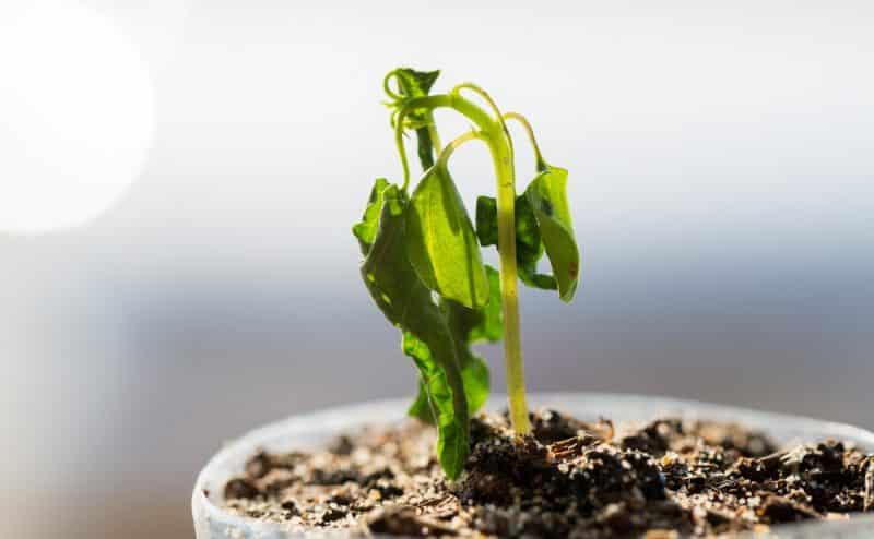 دراسة: الجفاف الجوي يبطئ نمو النبات في جميع أنحاء العالم