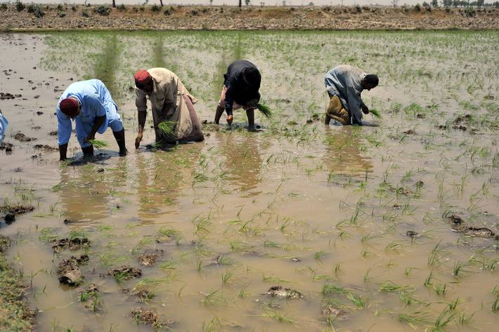 الصندوق الأخضر للمناخ يوافق على مشروع  FAO لتحسين القدرة على مواجهة تغير المناخ في باكستان