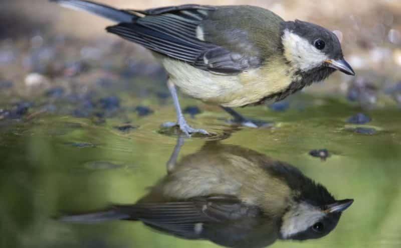 تغير المناخ: الحيوانات لا تتكيف بسرعة كافية