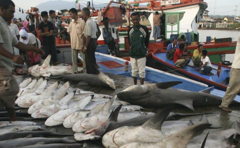 السيطرة على سوق الزعانف لإنقاذ أسماك القرش