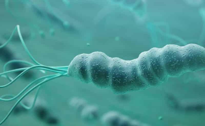 جرثومة المعدة أو  Helicobacter pylori ما الذي تعرفه عنها