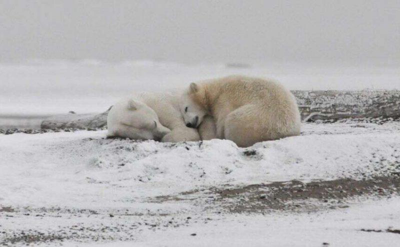 الجليد البحري في القطب الشمالي قد يختفي تماما حتى في شهر سبتمبر من كل صيف