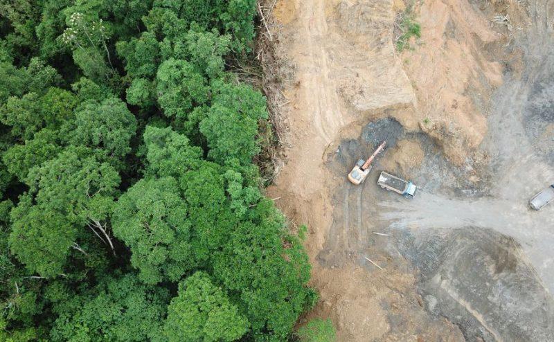 ارتفاع نسبة إزالة الغابات في الأمازون بـ 278 ٪ في الشهر الماضي وفقاً لبيانات الأقمار الصناعية
