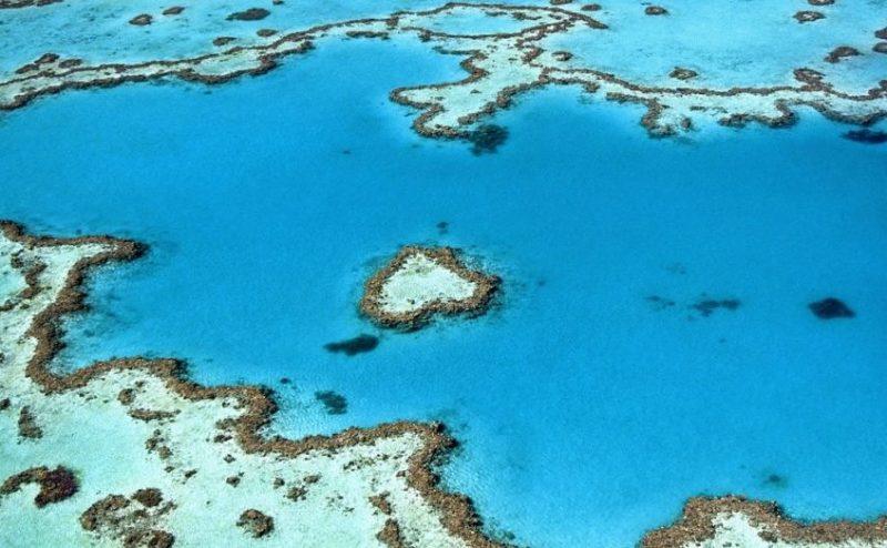 تلوث التربة يدمر الشعاب المرجانية