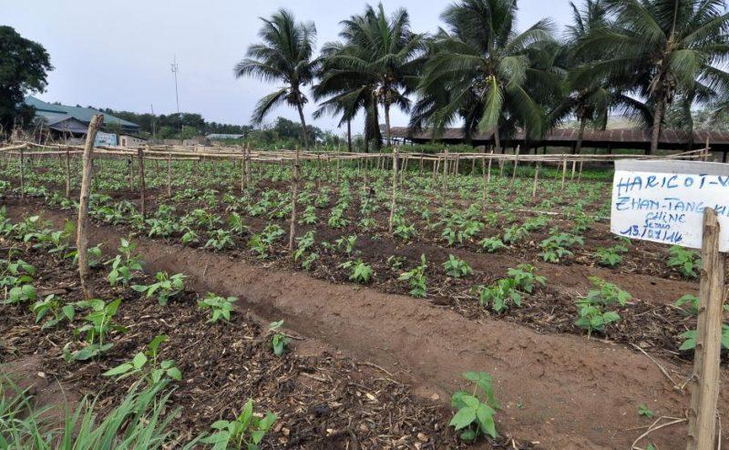 إفريقيا تبحث عن أنواع مختلفة من البذور المحسنة لمقاومة الآفات وتحمل الحرارة
