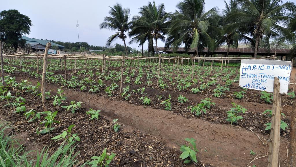 البذور المقاوِمة للمناخ