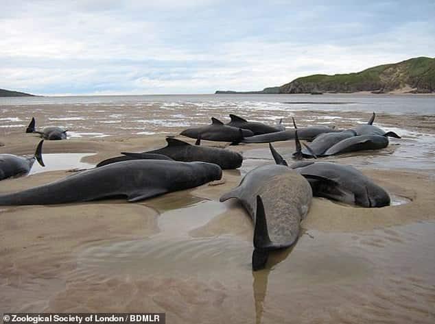 ارتفاع في أعداد الدلافين والحيتان النافقة التي تصل إلى الشواطئ البريطانية