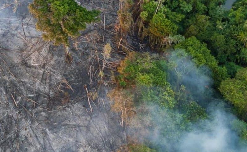 الأمازون وأكذوبة رئة العالم
