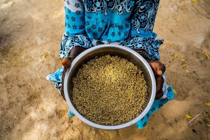 القمح في المغرب: كيف يؤثر التغير المناخي على المحاصيل الزراعية