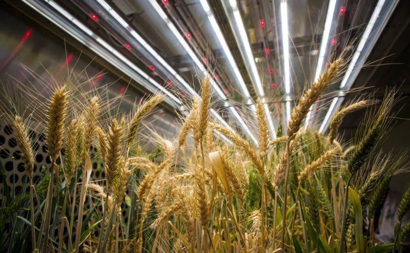 لإطعام كوكب ساخن يجب إنتاج نباتات أكثر كفاءة