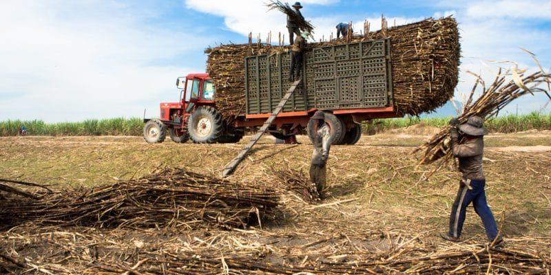 مصر: شركة ناشئة تحول النفايات الزراعية إلى سماد عضوي
