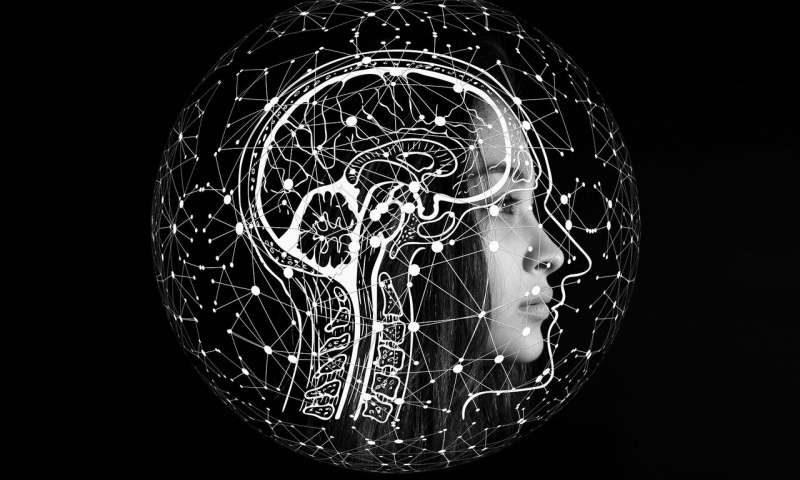 المتغيرات الجينية تؤثر على حجم جذع الدماغ