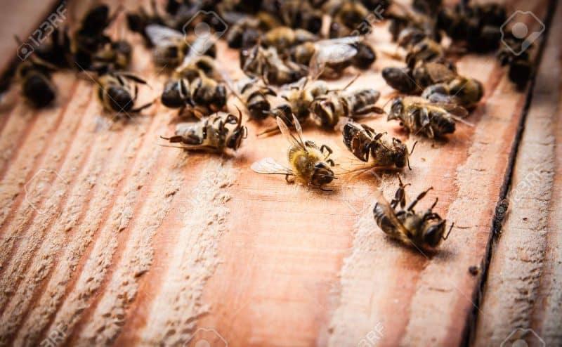 ماذا لو انقرض النحل ومات كله؟