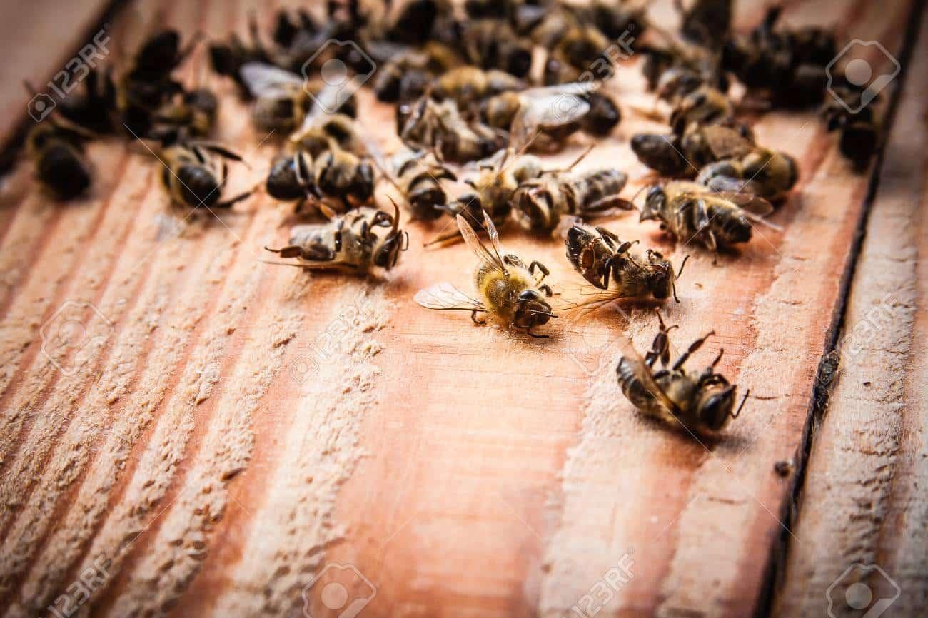 ماذا لو انقرض النحل