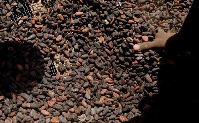 مشروع بحثي يهدف إلى تحويل قشور الكاكاو إلى طاقة