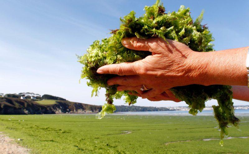 الطحالب سلاحنا السري لمكافحة تغير المناخ .. حسب دراسة حديثة