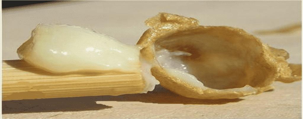 صورة توضح منتجات نحل العسل – الغذاء الملكي.