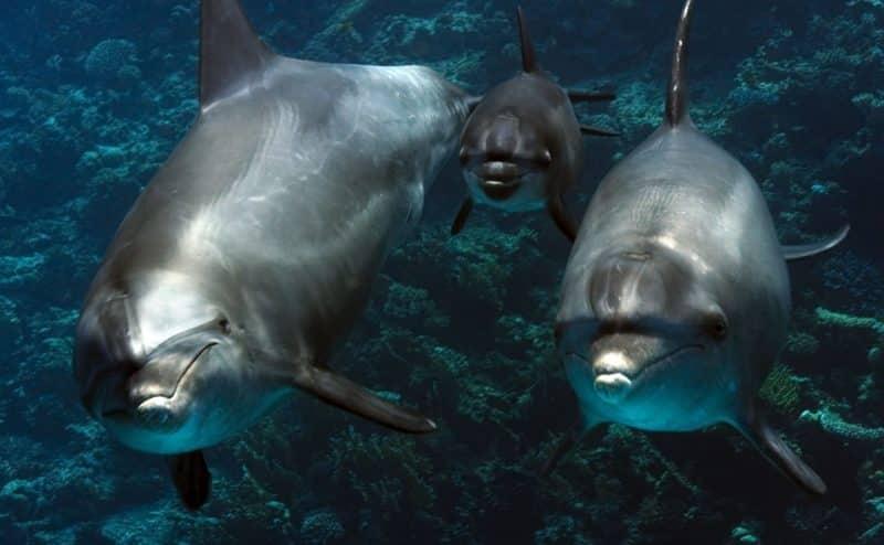 الأسماك قد تحمل سلالات البق المقاومة للمضادات الحيوية