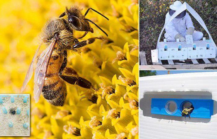 ادارة الاغذية والعقاقير توافق على مبيدات طبيعية تنتشر بواسطة النحل