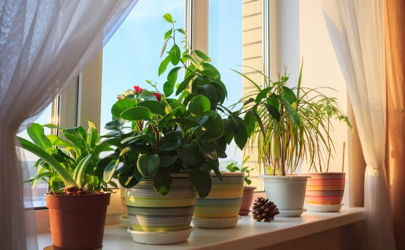 هذه الخدعة عن النباتات المنزلية ينكرها العلم .. حسب دراسة جديدة