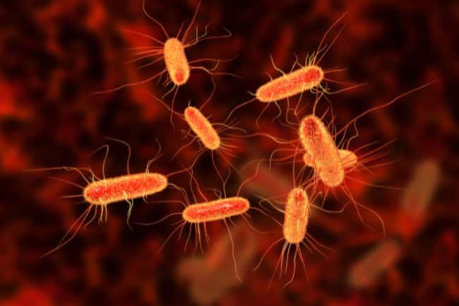 بكتيريا تأكل ثاني أكسيد الكربون لتقليل غازات الدفيئة ومكافحة تغير المناخ