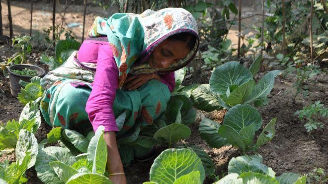 هل تستطيع حدائق الخضروات مكافحة تغير المناخ؟