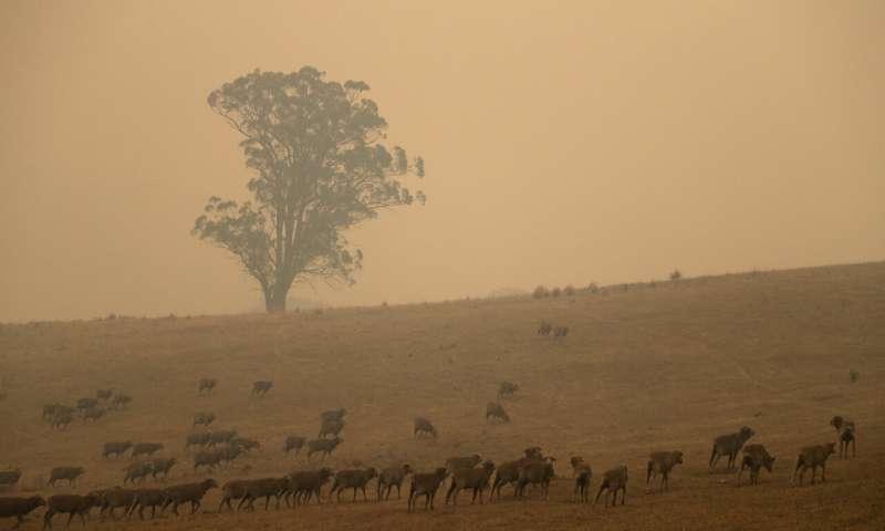 حرائق الغابات الاسترالية مستمرة…مزيد من الدمار والخسائر