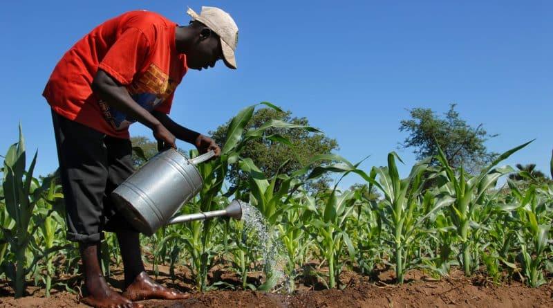 الحرب بين الطاقة النظيفة والوقود الأحفوري في إفريقيا…فمن سينتصر؟