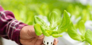 الزراعة المائية - مدونة نقطة العلمية